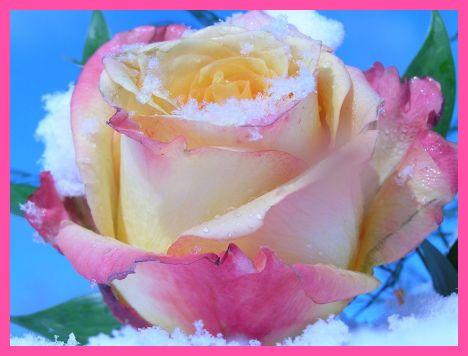 Wunderschönes Aroma von Lavendel verwöhnt die Sinne und wirkt entspannend!